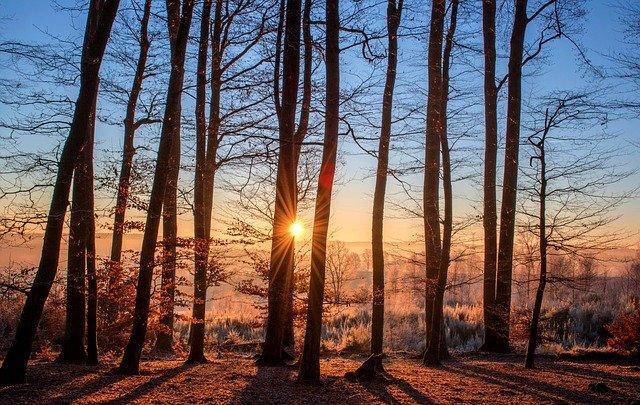 mietelauseet puut ovat runoja